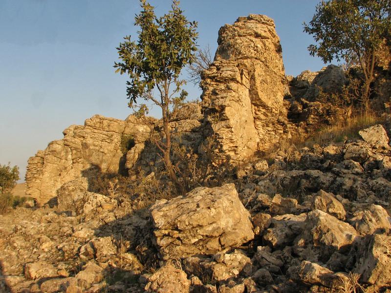 Habitat of Quercus brantii,  between Mazidagi and Derik [11] alt. 955m, limestone
