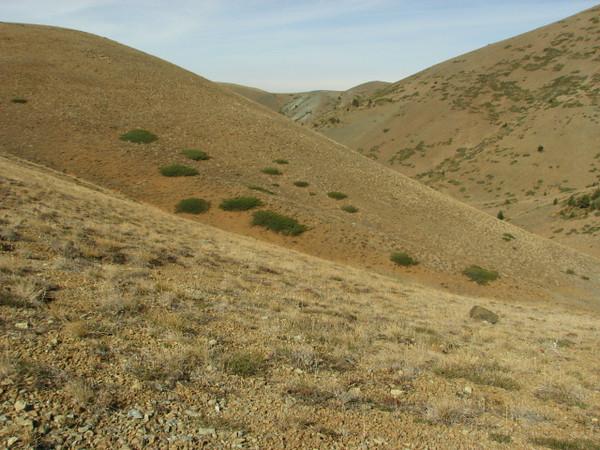 Habitat of Crocus kotschyanus ssp. suworianus, Yeniköy 2400m before Sakaltutan Gecidi [5]