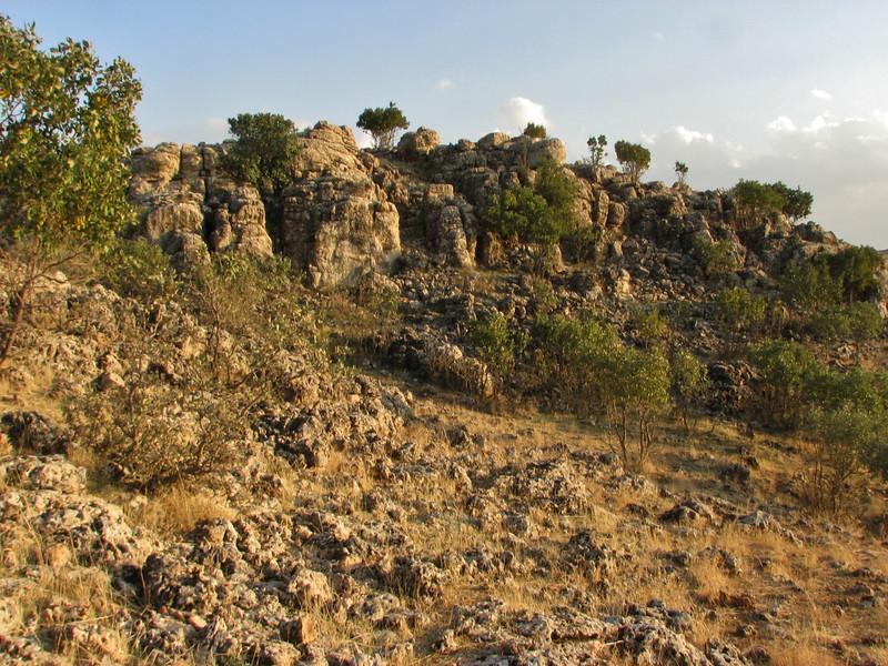 Habitat of Cheilanthes cf. fragans, between Mazidagi and Derik [11] alt. 955m, limestone rocks