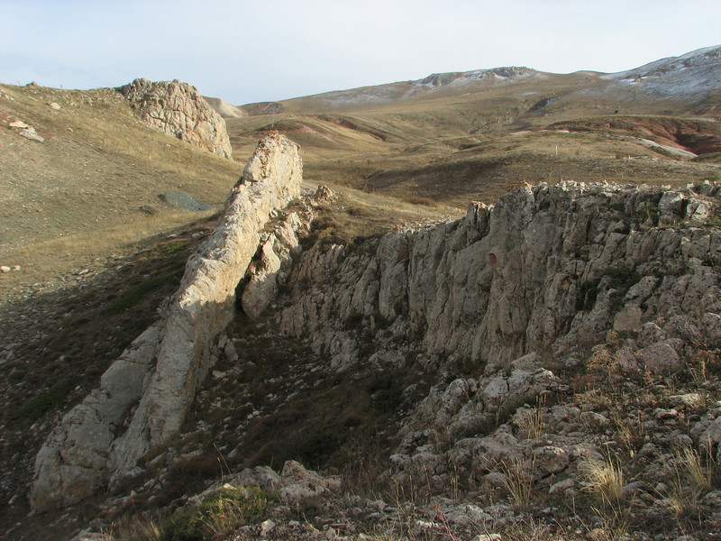 Habitat of Saxifraga kotschyi, 2133m North side limestone rocks, near Sipikor Gecidi 2390m N.E. of Erzincan [7]