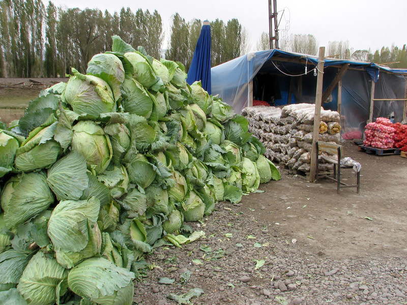 Giant cabbage for sale, along the road Tercan-Askale