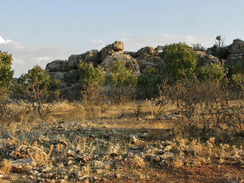 Habitat of Sternbergia colchiciflora, between Mazidagi and Derik alt. 955m, limestone  [11]