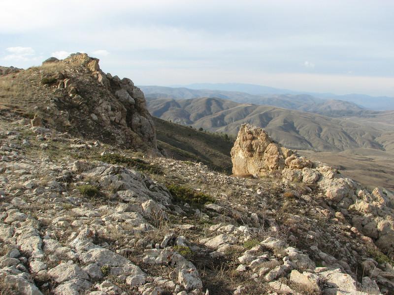 Habitat of Saxifraga kotschyi, 2133m North side limestone rocks, near Sipikor Gecidi 2390m N.E. of Erzincan [7]