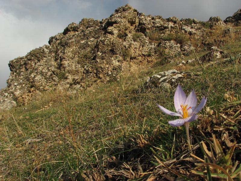 Habitat of Crocus cancellatus ssp. damascenus, 5km  N.E. of Mazidagi [10]