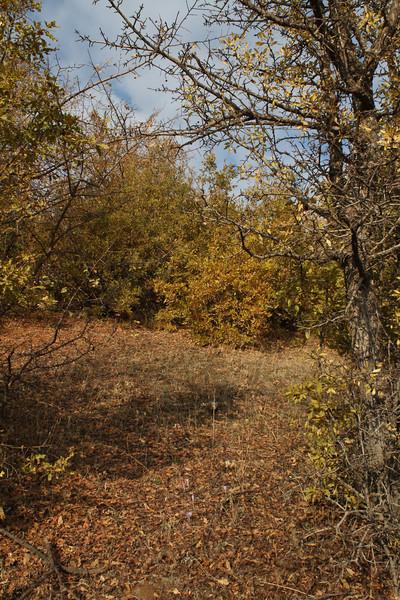 Habitat of Crocus kotschyanus ssp. hakkariensis,alt. 1680m Sapatan Gecidi 1900m area, 2km before Durak, near Semdinli [17]