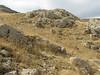 Habitat lime stone, Potentilla speciosa, Silene cappadocica and Rosularia cf. libanotica ?? Bögrüdelik Gecidi 1800m (Gürün-Ulas)