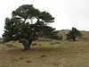Pinus sylvestris Akdag, North of Amasya (Amasya-Koyulhisar) [4]