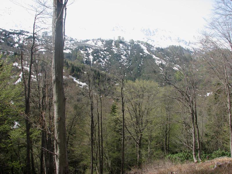 Humid forest near Murgul 1500m.