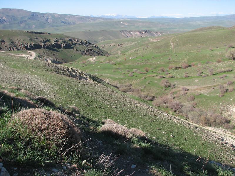 Landscape with Acantholimon spec. ? (near Askale, West Palendoken)