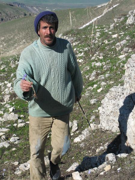 Local man with the edible Crocus biflorus ssp. tauri?? (near Çiftlik, west Palandöken)