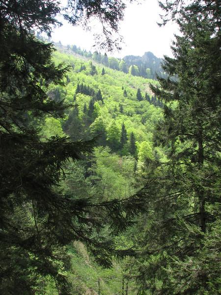Picea orientalis, Vadisi Milli Parki
