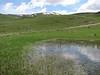 Rana cf. ridibunda, Mash frog,  (near Erzurum Palandoken)