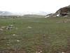 Palendoken mountains with Scilla sibirica ssp. armena
