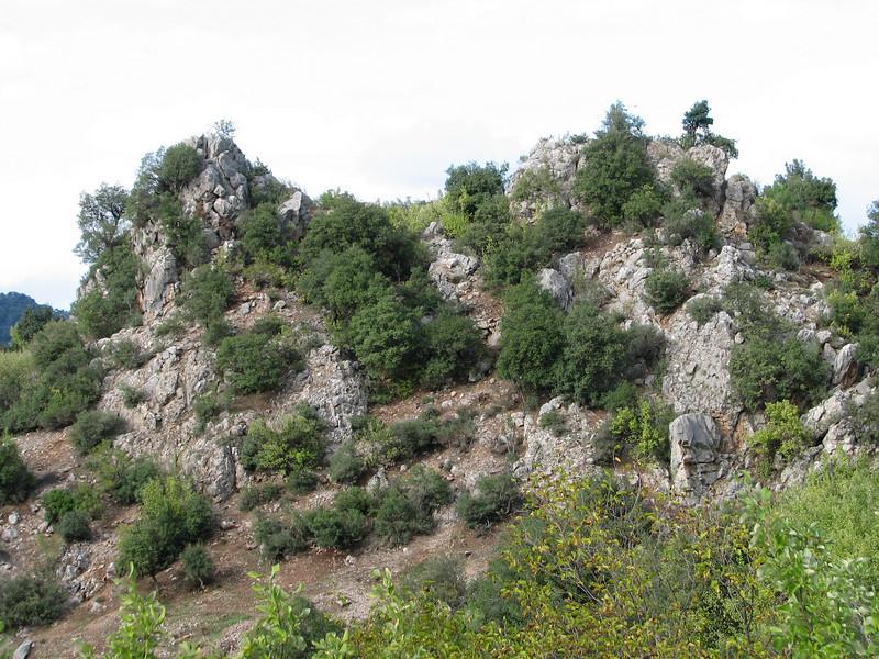 habitat of Daphne oleoides