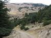 Cedrus libani 1400m SW of Caglayancerit