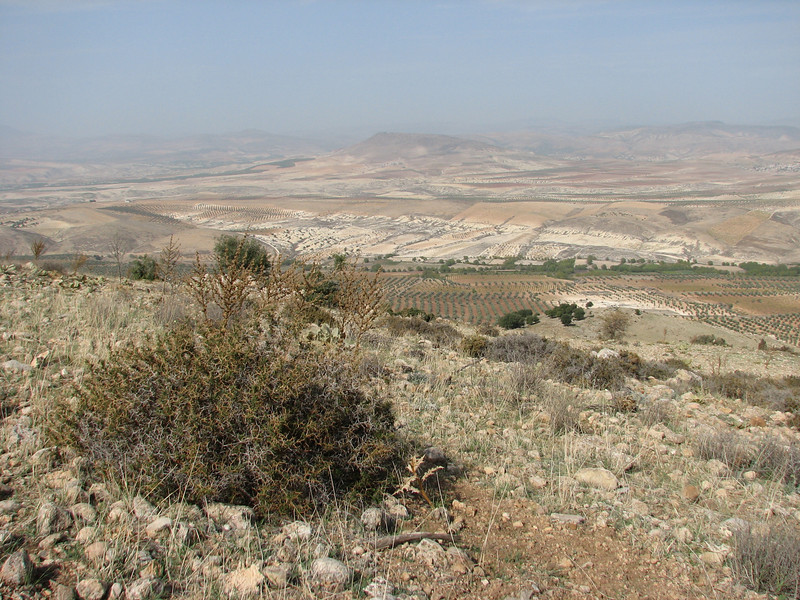 habitat of Crocus pallasii ssp. turcicus, North of Kilis, S. Turkey
