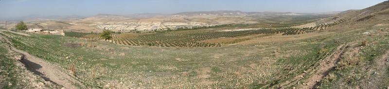 habitat of Crocus pallasii ssp. turcicus, North of Kilis, S. Turkey