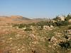 habitat of Colchicum polyphyllum (West of Gaziantep - Kahramanmara, S Turkey)