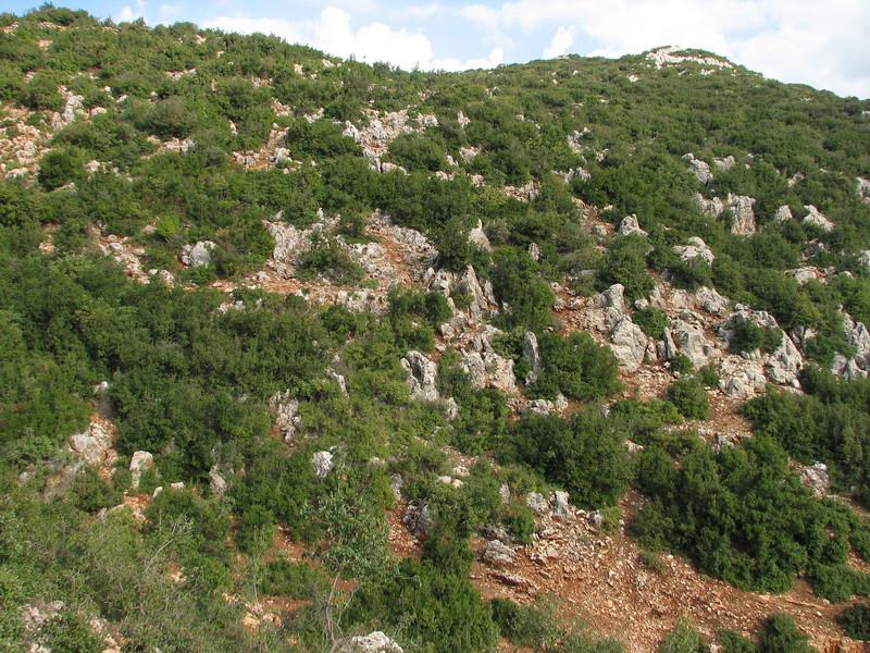 habitat of Rosularia sempervivum (Serinyol - Hassa, Hatay Province, S Turkey)