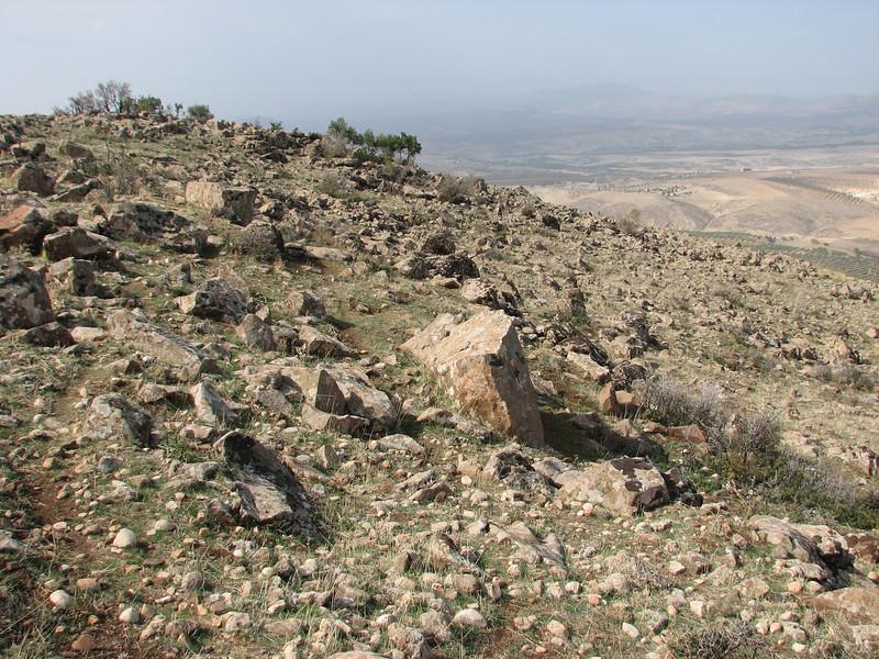 habitat of Colchicum polyphyllum, North of Kilis, S. Turkey