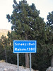 Juniperus excelsa (Sinekci Beli, 1380m., Southwestern Turkey)