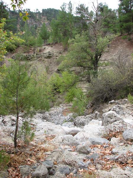 habitat of Eryngium thorifolium (between Fethiye and Gölhisar, SW Turkey)