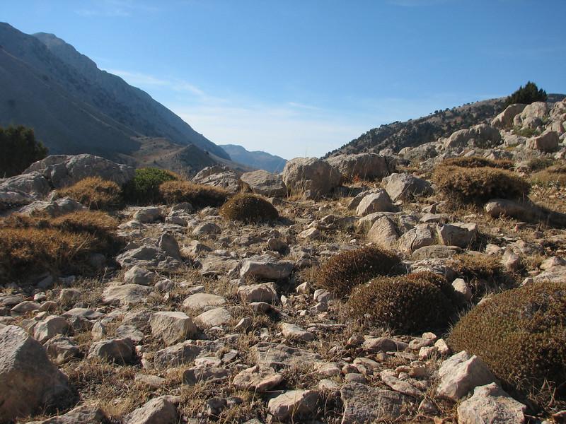 Crocus pallasii ssp. pallasii between Acantholimon bushes (dirt road west of Yesilbarak, Akdaglari, SW Turkey)