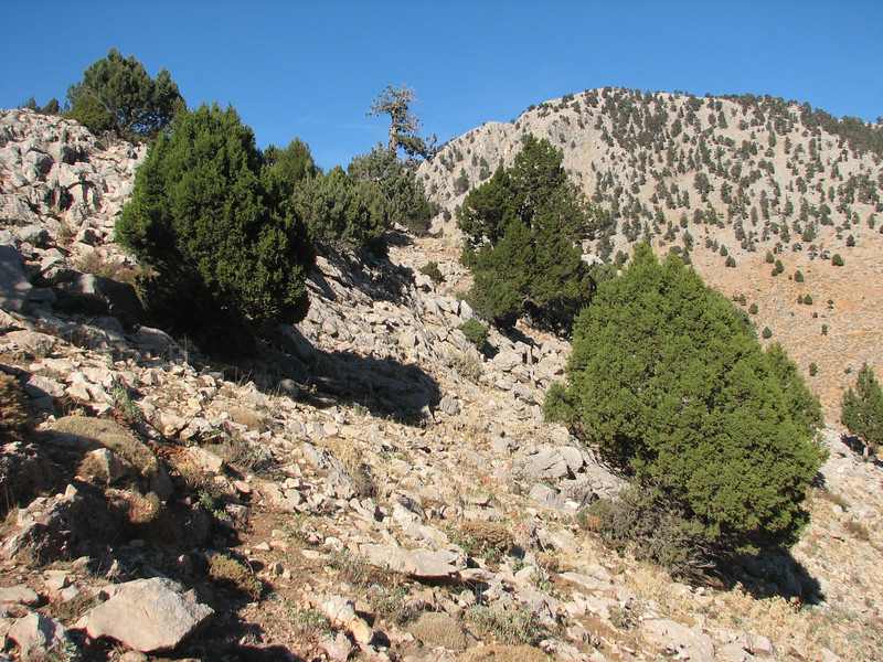 habitat of Colchicum sanguicolle (dirt road west of Yesilbarak, Akdaglari, SW Turkey)