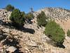 habitat of Colchicum sanguicolle (dirt road west of Yesilbarak, Akdaglari, SW Turkey)