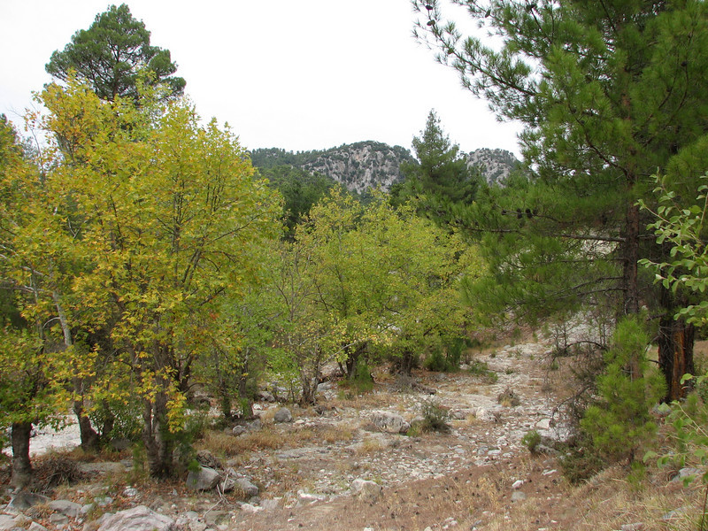 habitat of Colchicum variegatum - note the reflexed tepals (between Fethiye and Gölhisar, SW Turkey)