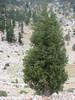 habitat of Juniperus drupacea ( Southwestern Turkey)