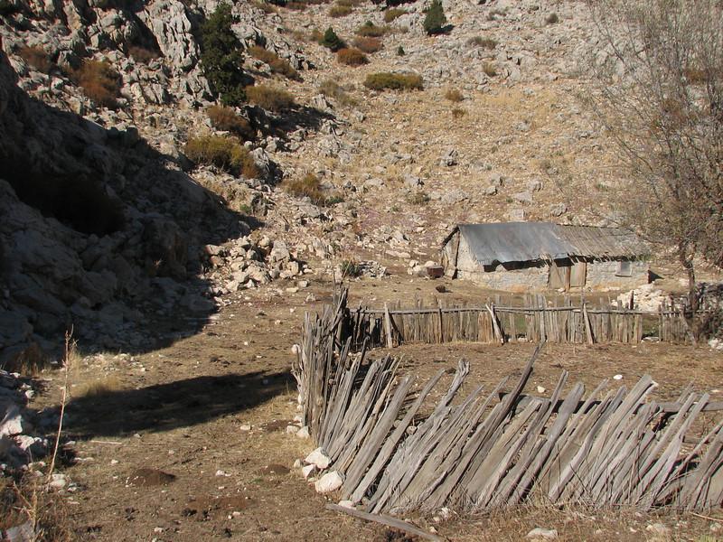habitat near a shed of Colchicum sanguicolle. (Akdag.1803m. Southwestern Turkey)