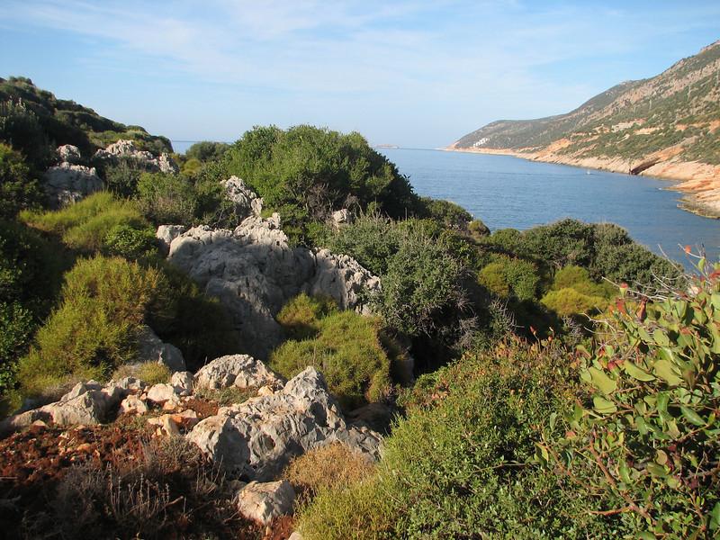 habitat of Colchicum stevenii near the coast of SW Turkey