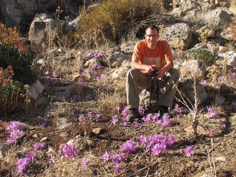 KeesJan and many plants of Colchicum sanguicolle (Akdag.1803m. Southwestern Turkey)