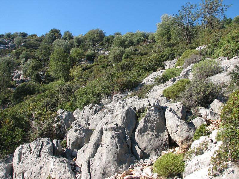 Colchicum stevenii (Finike, 25m altitude, SW Turkey)