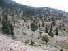 habitat of Crocus asumaniae (Geyik Gaglari, near Akseki.1328m Southwestern Turkey)