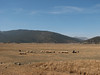 shepherd and his sheep (SW Turkey)