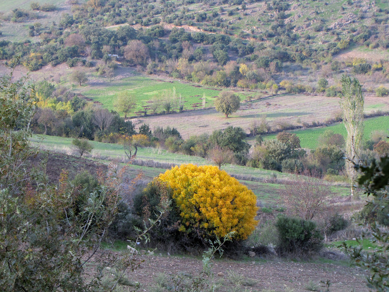 autumn colours (Along road between Balikesir and Dada, at about 350m altitude and about 35km east of Balikesir)