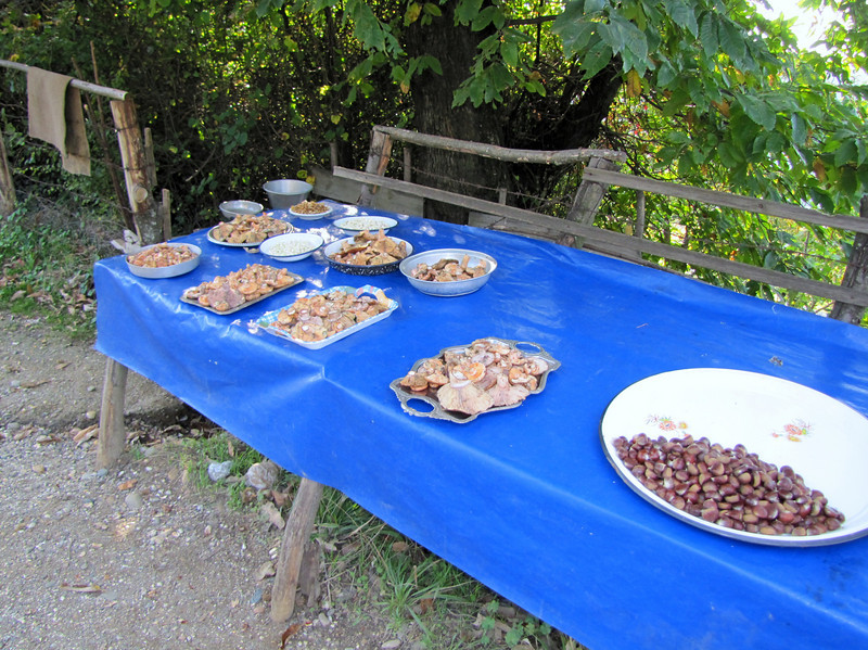 Fungus and Castanea sativa, chestnut, for sale along road (Uludag)