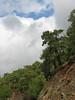habitat of Pinus brutia (near Marmaris)