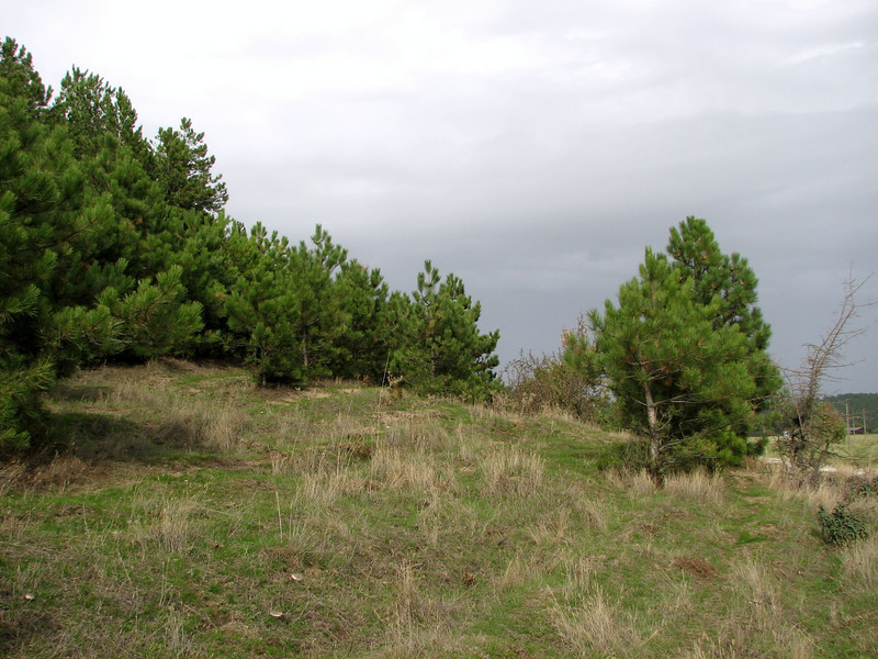 habitat of Colchicum micaceum (Above Buldan, Süleymani Köyü Kamp Yeri, 1200m, near lake, margins of Pinus nigra ssp. pallasiana woodland)