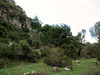 Habitat of Colchicum balansae (2 km on Bozburun junction from Marmaris, limestone, 15m altitude)