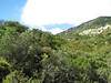Maquis vegetation (between Datça and Knidos, Datça Peninsula)