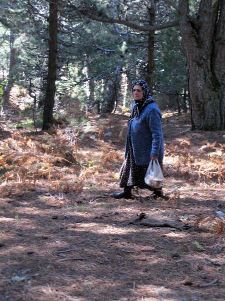 Turkisch woman collecting mushrooms (Between Bursa and Uludag, 1000m altitude)