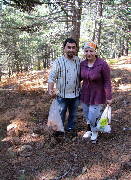local people collecting mushrooms (Between Bursa and Uludag, 1000m altitude)