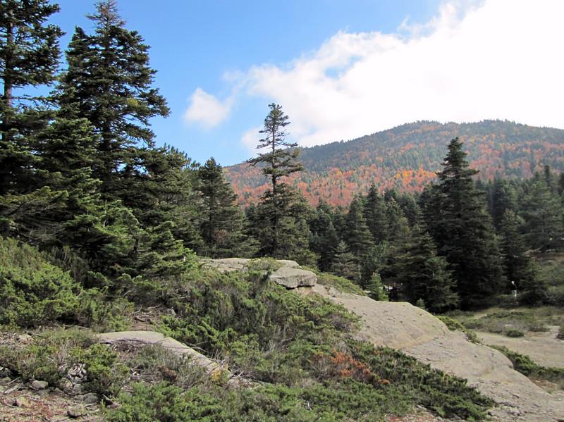habitat of the endemic tree, Abies bornmuelleriana, Uludag fir (on granite, 1750m altitude, Uludag)