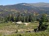 colourfull slope with Abies bornmuelleriana, Fagus orientalis and Populus tremula (Uladag)
