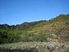 landscape a few km past junction to Bozborun on the Marmaris - Datça road, 85m altitude on serpentine
