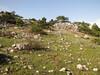 habitat of Colchicum boissieri and Crocus pallasii ssp. pallasii (near entrance of Spil Dağı Milli Parki, at about 1000m altitude)
