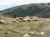 A sheperd on Babadağ, a mountain near the town of Denizli)